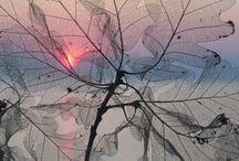 beauty of nature~☆~sunsets~☆~waterfalls~☆~seasons~☆~