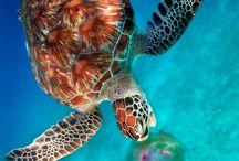Animals of the sea