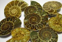 My fossil bacheca