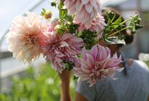 Lievelings bloemen