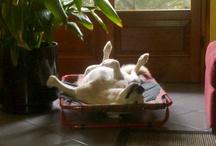 labrador and friends / In ricordo della mia adorata Kira ,labrador miele femmina,che non c'è più!!!!