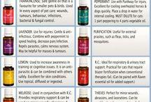 Essential oils ~ pets
