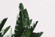 Plants / greeen