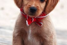 pups / by Payton Peace