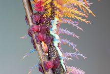 Makro  Insekten