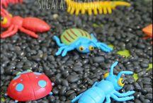 Education: Bugs / Bug theme