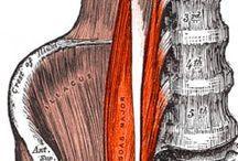 Anatomía musculo-esquelética
