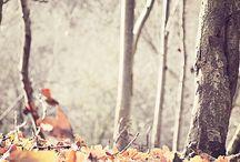 Efterår ❤️