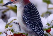 Winged beauties / Birds
