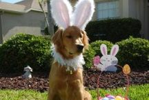 Easter and springtime  / by Jill Nesnadny