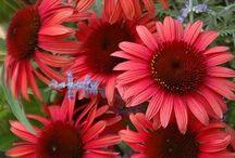Blommor, bär och grönsaker