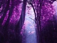 purple / by