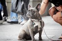 Emma our french bulldog