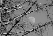 Grays/Silver.....