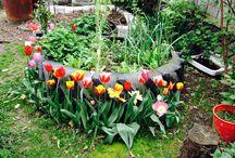 Laurence's Opawa garden