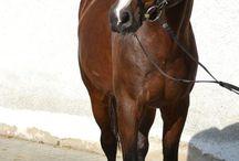 Een heel mooi paard