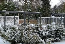 Snowy pictures from the Kitchen Garden
