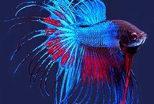 Especies del mar