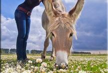 Buiten de gebaande paden  / Wandelen door het idyllische polderlandschap met een ezel als gezelschap of zwemmen met zeeleeuwen.