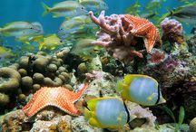 Caribbean Diving & Snorkeling Destinations / Diving & snorkeling destinations in the Caribbean and BVI's
