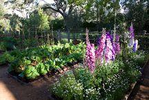 Garden: Potagers & Edible Garden Beauty / A collection of all things edible gardens when it comes to garden.  Edible gardening is a passion of mine!  / by Susy Morris