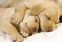 Hunde/Dogs