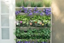 Vertical Planters in Backyards / Vertical Planters (or Living Walls) are all the rage right now. How can you put one in your space?
