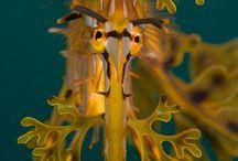 Ocean life / Under havets Overflade