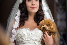 A doggone great wedding / by Kathleen Kowalski