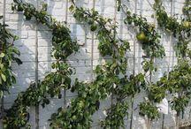Home - Garden Inspiration / Edible gardening