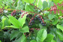 PNW Native Plants