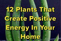 plantas carnudas