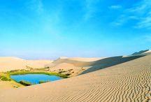 oasis of desert