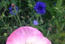 My wild flowers :-)