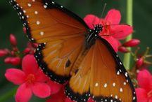 Butterfly Stuff / by Sharon Daugherty Henderson