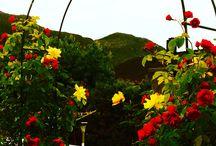 Blomster - Цветы / Blomster