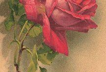 Güller yağlı boya resimler