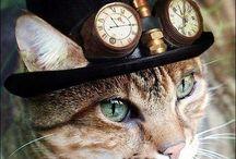 Lovely caats))