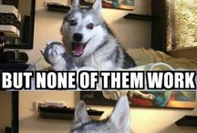 Husky Jokes