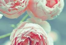 Flowers R A Girl Best Friend :) / by Hayley Tiberghein