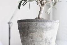 Krukor/växter