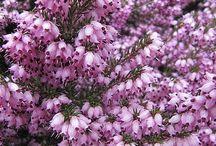 Balcon, fleurs, herbes aromatiques