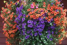 Puutarhaunelmia - Garden dreams / Amateur garden and new inspiration