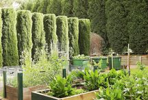 Potagers - Vegetable gardens - edible gardens - large and small