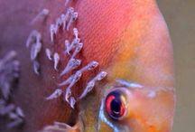 Decorated Fish