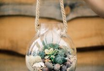 Terrariums and indoor plants / For the home! / by Molly Williams
