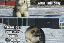 Hauskat eläinkuvat