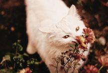 Pets / by Loretta Lowe