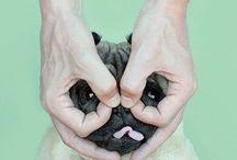 Animals / Cute & Fluffy