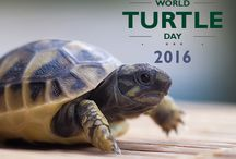 World Turtle Day 2016 / The purpose of World Turtle Day, May 23, sponsored yearly since 2000 by American Tortoise Rescue, is to bring attention to, and increase knowledge of and respect for, turtles and tortoises, and encourage human action to help them survive and thrive.
